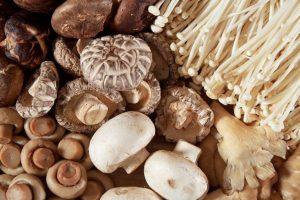Manfaat Jamur Yang Tidak Banyak Orang Tahu